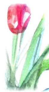 cropped-tulipsinvase1a_1-copy4.jpg